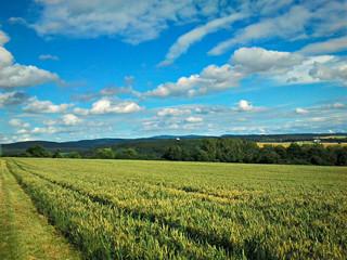 Getreidefeld mit blauem Himmel und Wolken