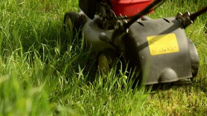 Gardener mowing lawn in the garden