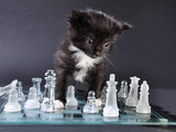 kitten glass chess board with falled pieces - 83705913