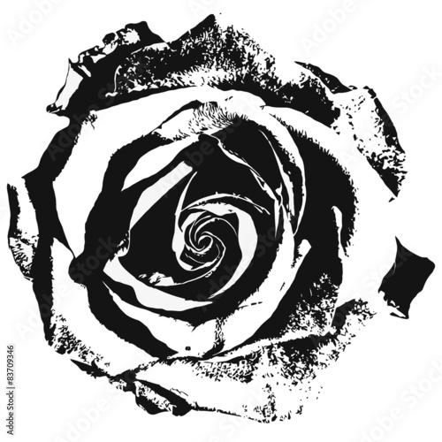 stylizowany-rozany-siluette-czarno-bialy