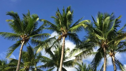 Tropical image with palm trees in the blue sunny sky