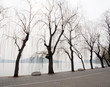 Willow trees on the lakeside in Beihai park