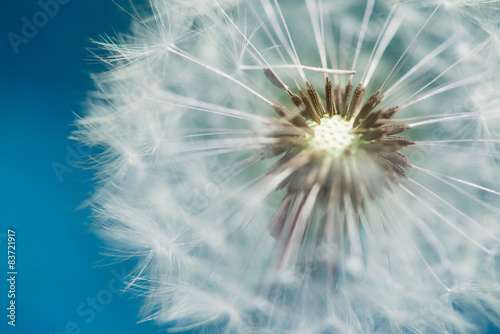 blossom of dandelion blowball with blue sky bavkground © a2l