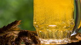 Game of Bubbles in a Glass of Beer