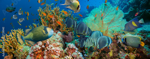 Obraz na Szkle Tropical Anthias fish with net fire corals
