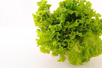 新鮮なサラダ菜