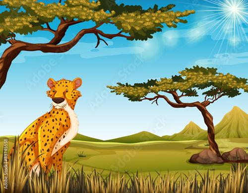 Plexiglas Zoo Cheetah