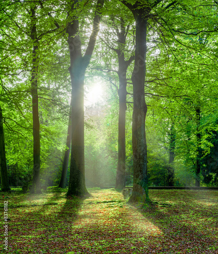 Fototapety, obrazy : grüner Wald im Sommer mit Gegenlicht