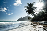 Fototapeta sable plage cocotier