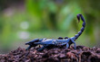 Постер, плакат: Scorpions in the forest can harm humans