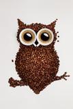 Fototapety Coffee owl.