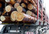 Timber truck - 83935726