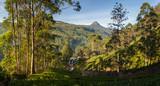 Panorama of Dalhousie town with Adams peak and tea plantations