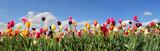 Tulpenfeld Panorama - verschiedene Sorten © SusaZoom