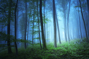 Magic blue color light in mystic forrest © robsonphoto