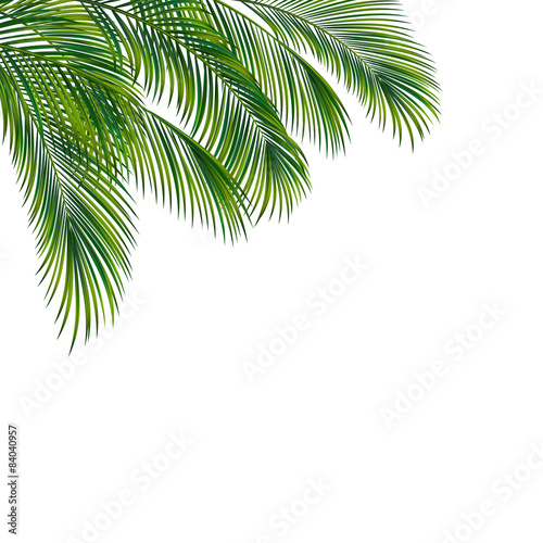 Zdjęcia na płótnie, fototapety, obrazy : Palm tree foliage isolated on white background