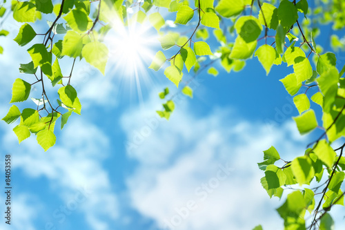 Plexiglas Berkenbos Spring natural background with young birch leaves