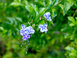 Blue purple flowers