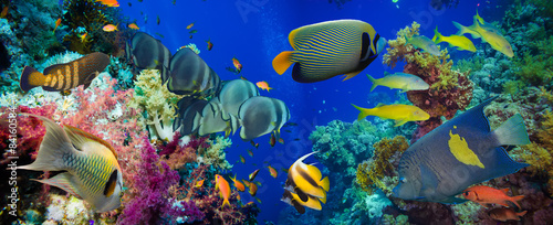 Fototapeta Colorful underwater reef with coral and sponges