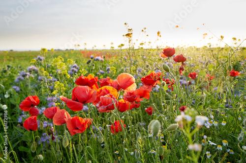 Naklejka Meadow full of wild flowers at sunset
