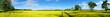 rapeseed field panorama - 84183344