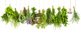 Fototapety Kitchen herbs hanging isolated on white. Food ingredients