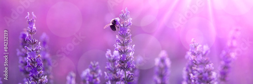 Leinwanddruck Bild Bee on lavender