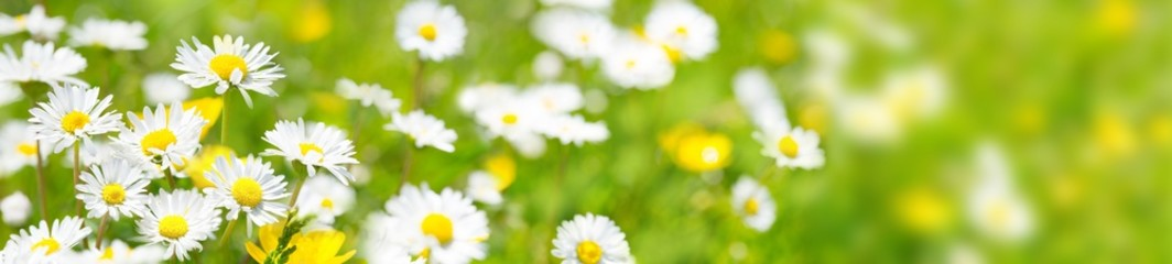 Blumenwiese - hochauflösendes Panorama © Floydine