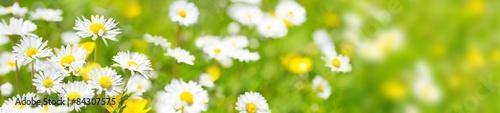 Łąka kwiatowa - panorama o wysokiej rozdzielczości
