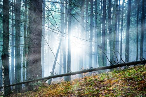 Mysterious fog in the forest © Pavlo Vakhrushev
