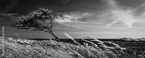 Zdjęcia na płótnie, fototapety, obrazy : Lonely tree in black and white
