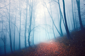 Scary colored foggy forest path © robsonphoto