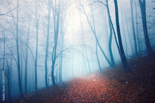 Scary colored foggy forest path