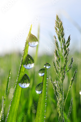 Panel Szklany Fresh green grass with water drops closeup. Nature Background