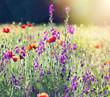 Poppy flowers in meadow
