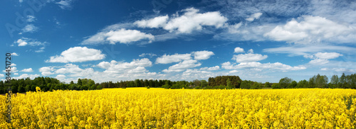 Panel Szklany Rapeseed field panorama with beautiul sky