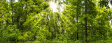 Fototapeta Waldpanorama im Frühling mit Sonnenstrahlen