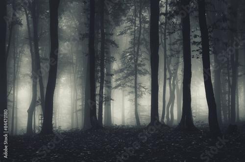 Poster dark forest landscape at night