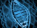 DNA Molecules - 84481184