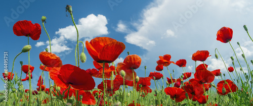 Fotobehang Klaprozen red poppy and clouds