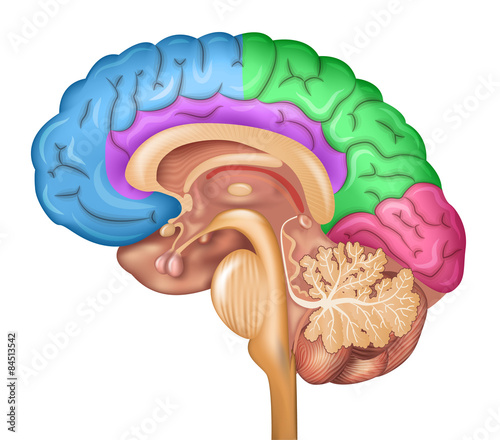 Photo Wallpaper - pituitary - Mural, Poster, Stickers, Canvas