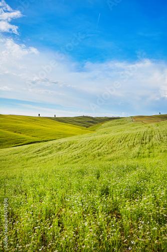 hills in sunny day Tuscany, Italy
