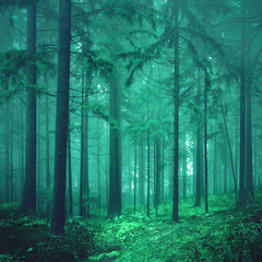 Magical green colored foggy fairytale forest © robsonphoto