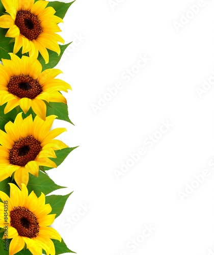 Naklejka Sunflowers Background With Sunflower And Leaves. Vector