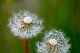 Fototapeta Make A Wish