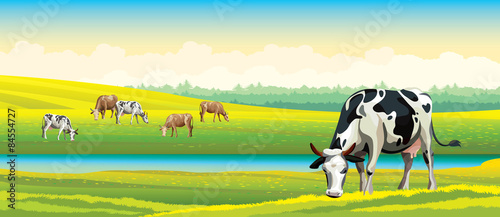 Cow and green meadow. Rural landscape. - 84554727