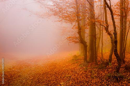 droga-przez-las-jesienia