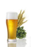麦とホップとビール/白背景の上にホップと麦とグラスビールが並んでいる。