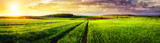 Fototapety Rural landscape sunset panorama