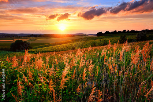 Fototapety, obrazy : The setting sun paints the sky and vegetation red